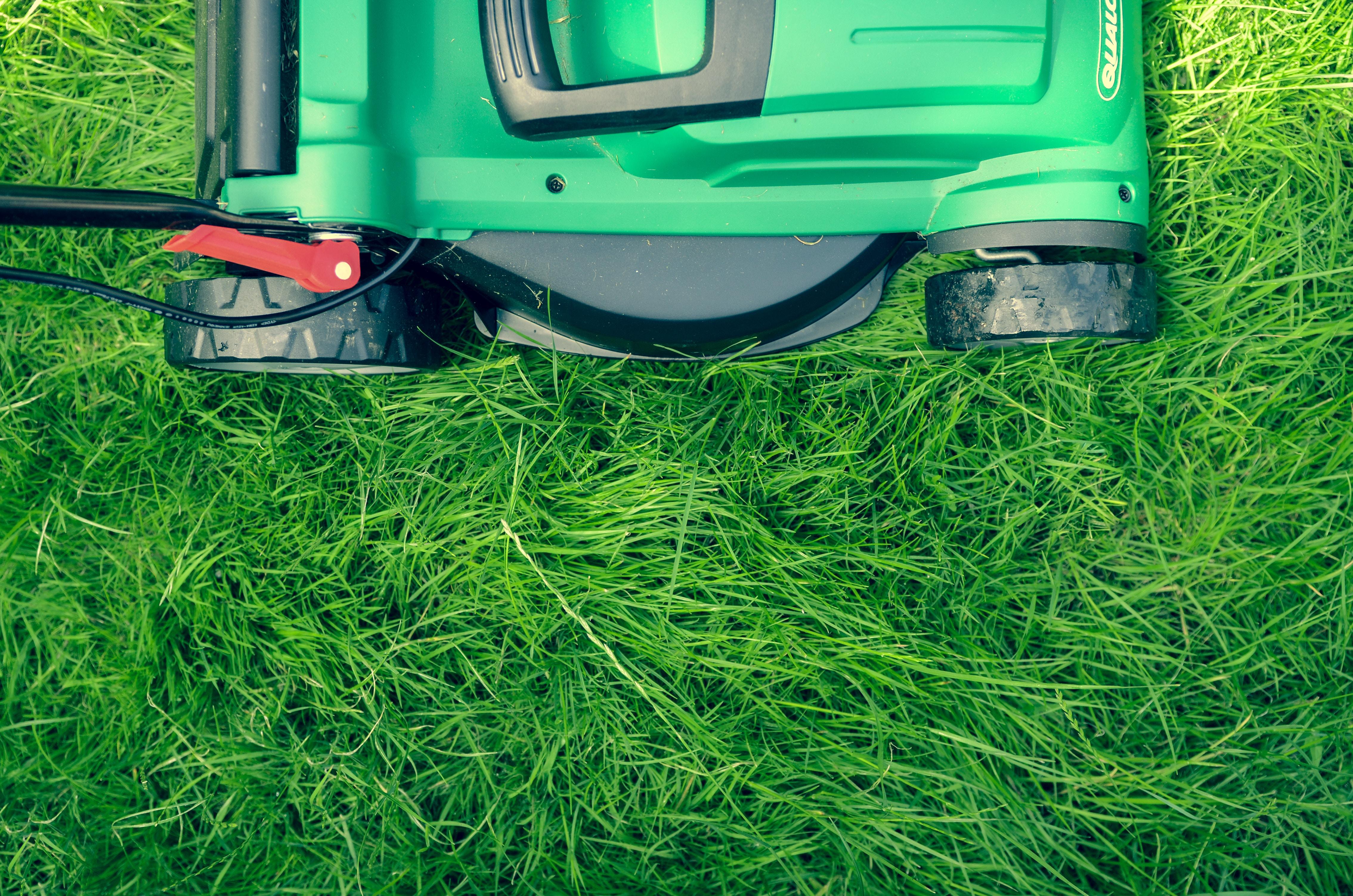 Trawnik w ogrodzie – jak o niego zadbać?