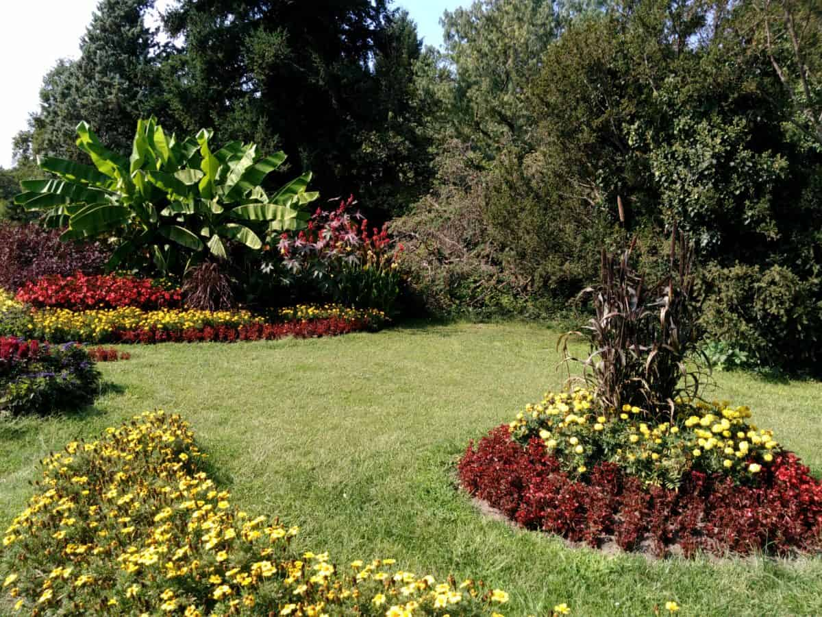 Jak zaplanować i urządzić ogród?