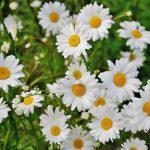 Jak wiosną zadbać o rośliny wieloletnie?